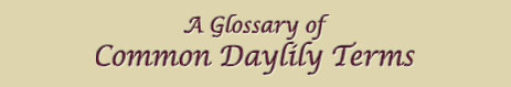 Header: A Glossary of Daylily Terms