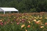Daylily-Garden-Beds-001.jpg